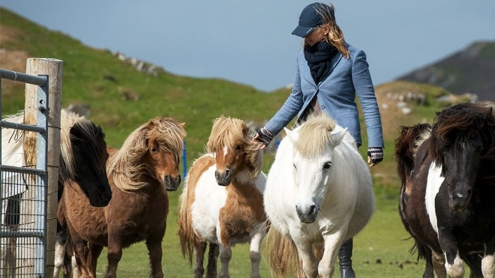 Care and Management of Shetland Pony