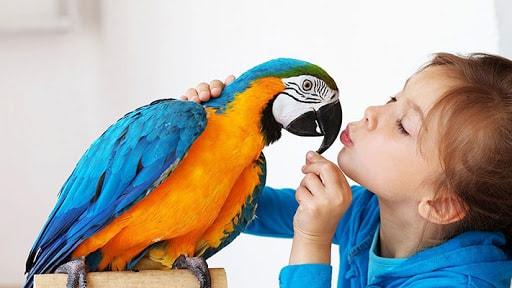 Companion Birds