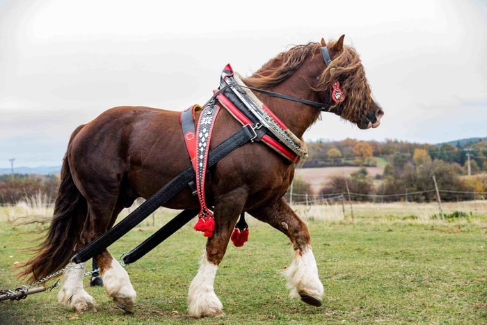 Diet and Nutrition of Horse