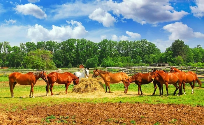 Requirement of Horse Vaccination