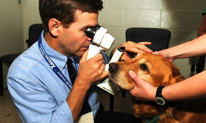 Treatment of Pink eye in dogs