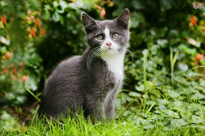 Diagnosis of Lyme Disease in cats