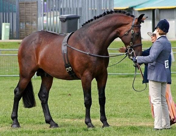 Behavior of Horse