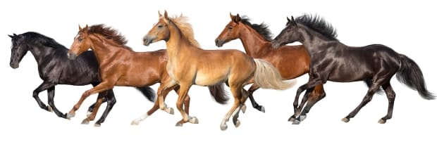 Horse Breeds of America