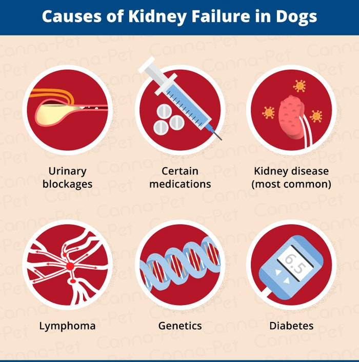 Causes of Renal Failure in Dogs