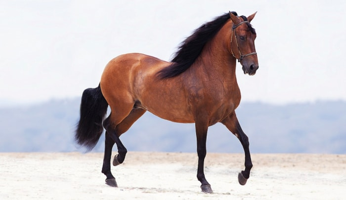 Height and Weight of Horse