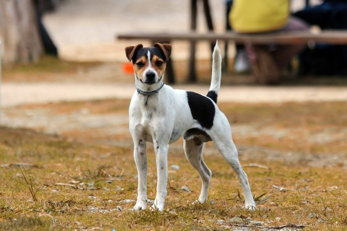Causes of Anemia in Dogs