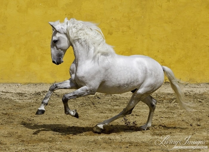 Exceptional Gaits of Horse