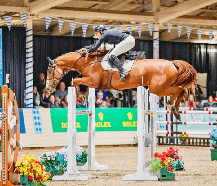 Jumping by Dutch Horse