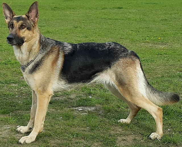 Colors of GSD