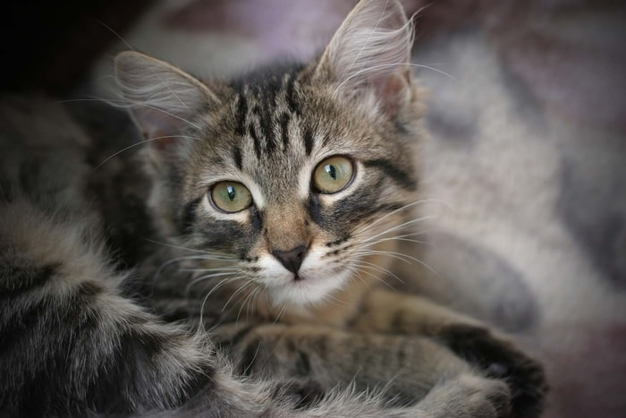 Causes of Diarrhea in Cats