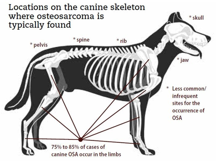Dogs Anatomy and Location of Bone Cancer