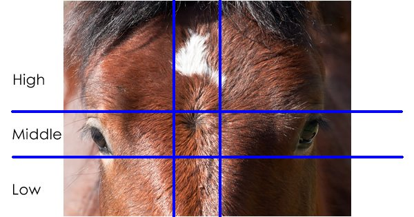 Horse Whorl Locations