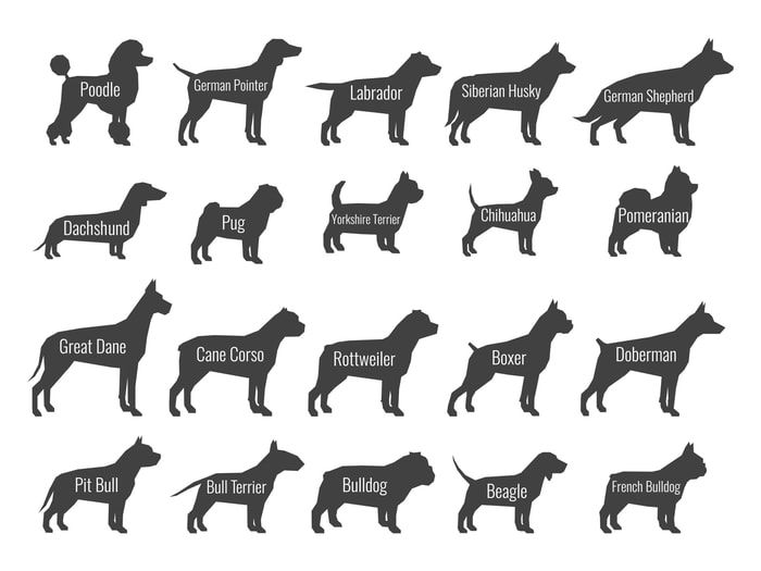 Common Dog Tail Types